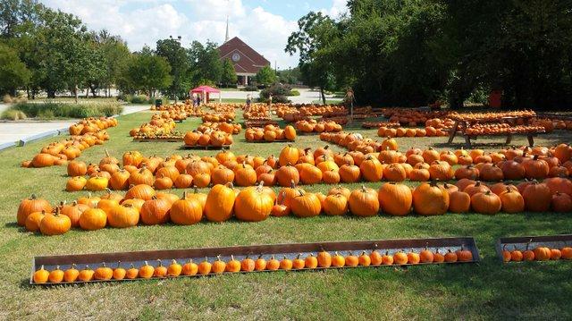 pumpkins.jpe