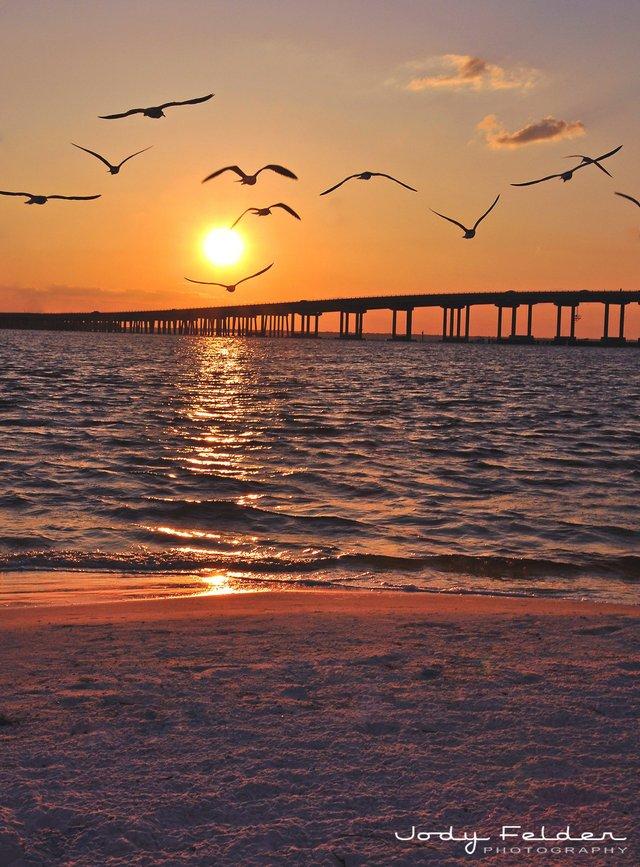 SunsetBirds_Felder.jpe