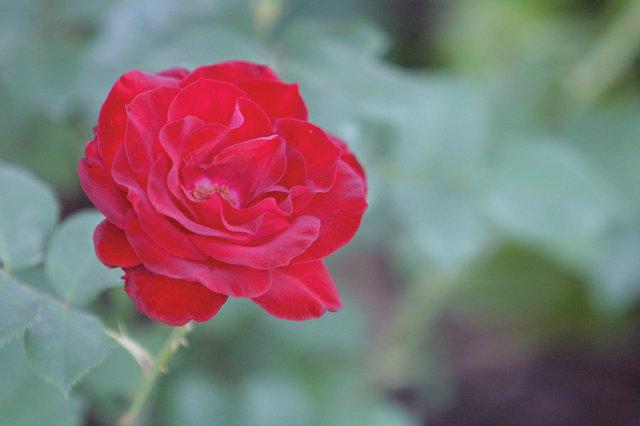 Garden_WEB.jpe