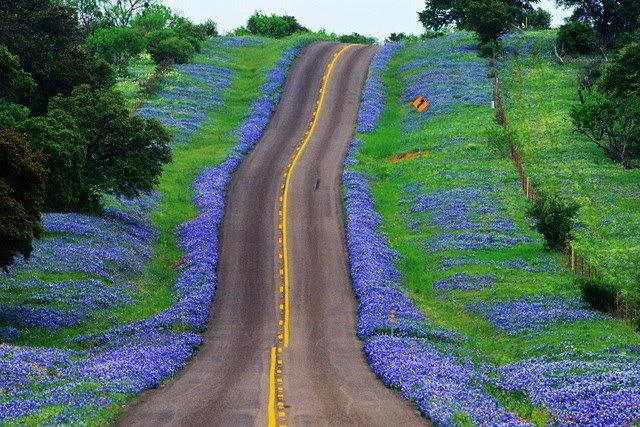 bluebonnet_highway.jpe