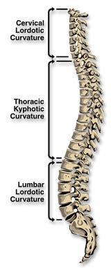spine1.jpe