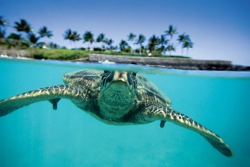 Sea_Turtle.jpe