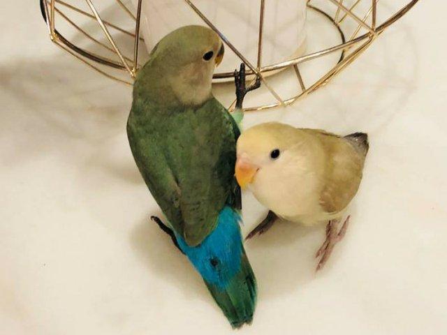 Feature_Pets_HMBirds.jpg
