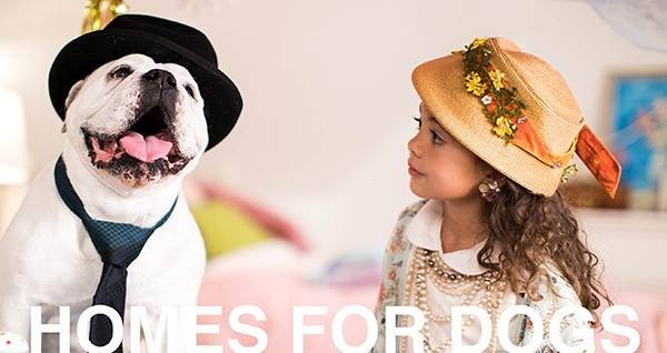 Homes for Dogs.jpg