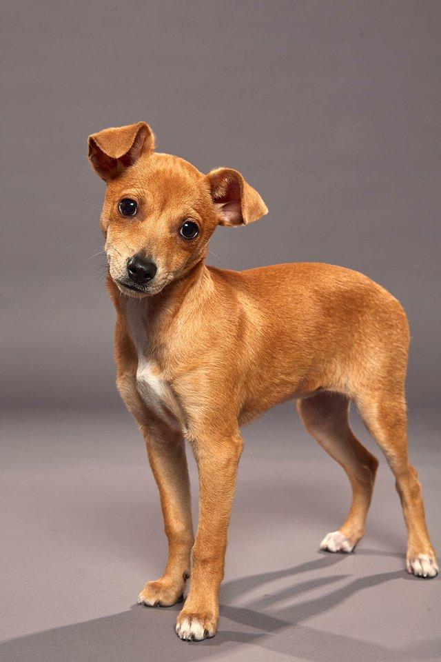 puppy bowl jora.jpg