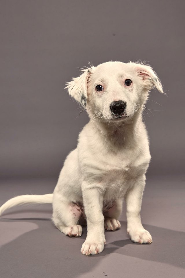 puppy bowl pearl.jpg