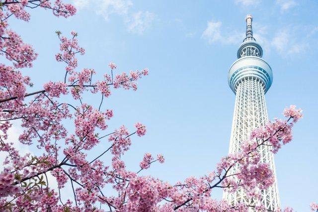 tower_cherry copy.jpg