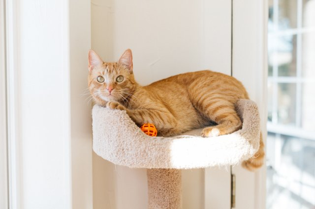 Copy of 01-5-Jonesy Cat-239 (1) (1).jpg