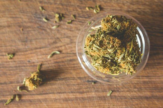 JLF_Marijuana_2-21.jpg