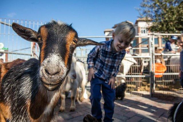 Petting Zoo Fun at FFM.jpeg