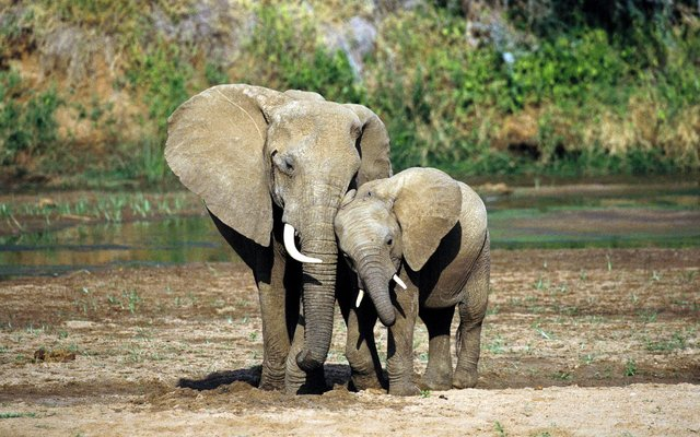 baby-elephant-and-mother-wallpaper-1-1.jpe