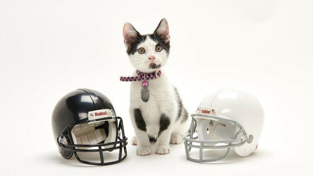 cow-kitten-bowl-hallmark.jpe