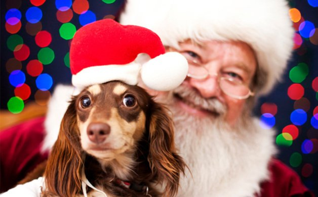 main_image_dog-santa-photo_jbmk2p.jpe