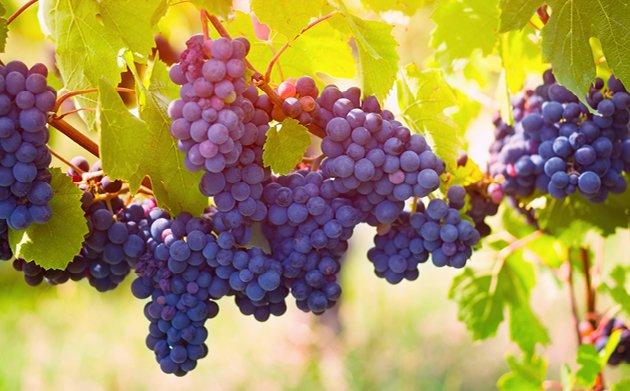 ssNOV_16_WEB_WineFeature.jpe